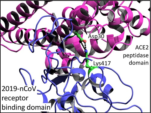 Do Structures of the Coronavirus Spike Protein Hold the Key to Winning?